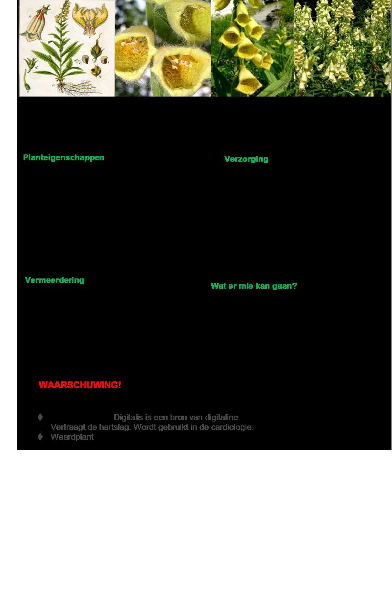 Grootbloemig Vingerhoedskruid.rev.LL.2016.vs1a