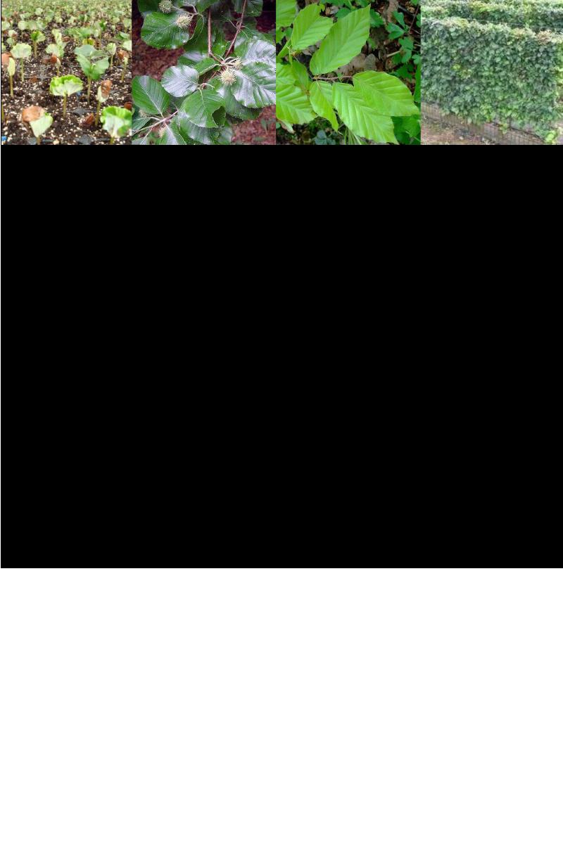 Haagbeuk.rev.LL.2016.vs1a