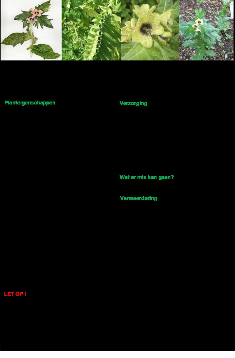 0 Bilzekruid (blizenkruid).rev.LL.2016.vs1a