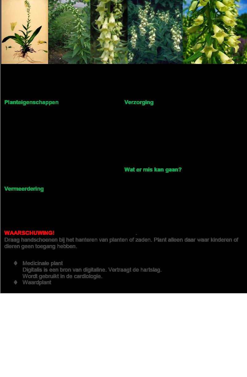 Geel Vingerhoedskruid.rev.LL.2016.vs1a