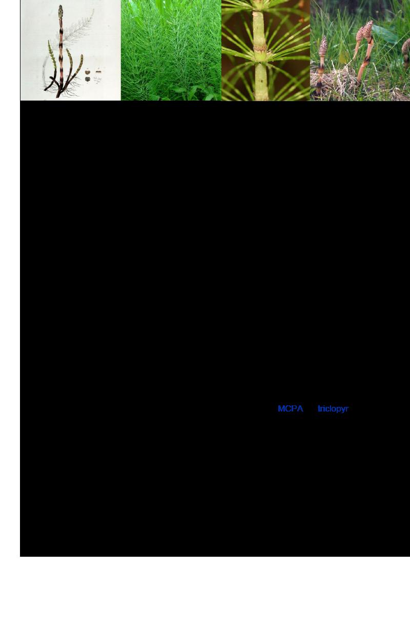 Heermoes- Akkerpaardenstaart- Roobol.rev.LL.2016.vs1a