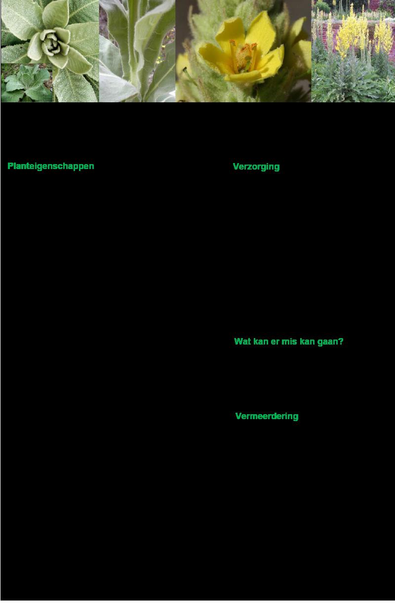 Koningskaars.rev.LL.2016.vs1a