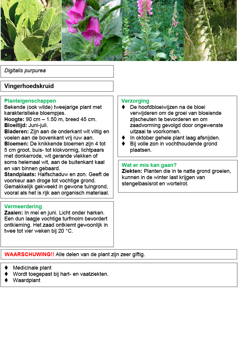 Vingerhoedskruid.rev.LL.2016.vs1a