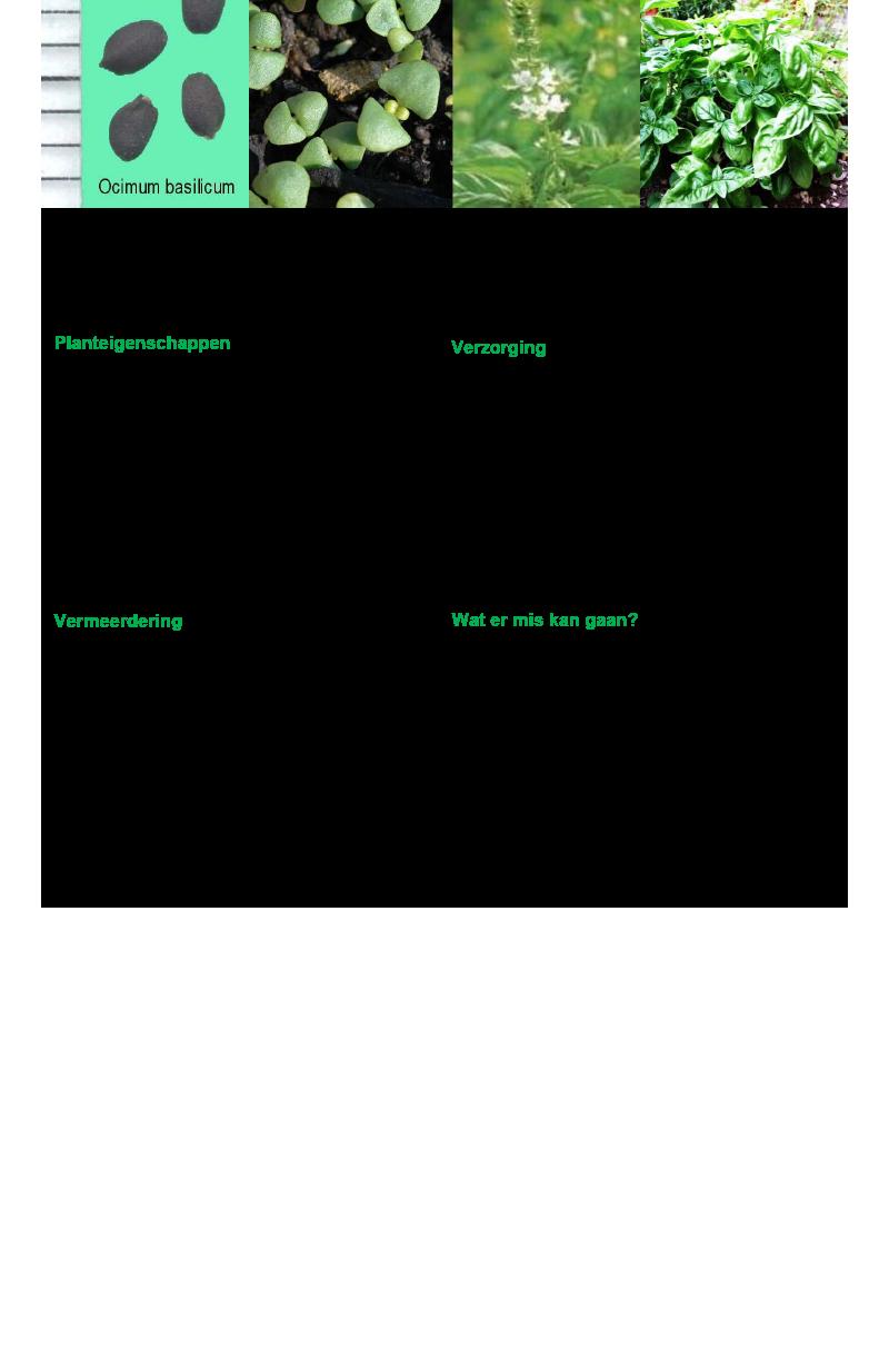 Vleeskruid-bazielkruid-basilicum.rev.LL.2016.vs1a