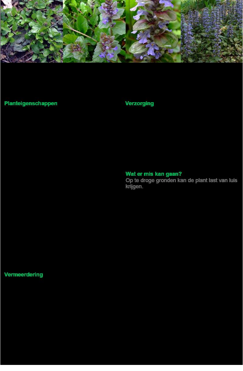 41 Kruipend Zenegroen.rev.LL.2016.vs1a