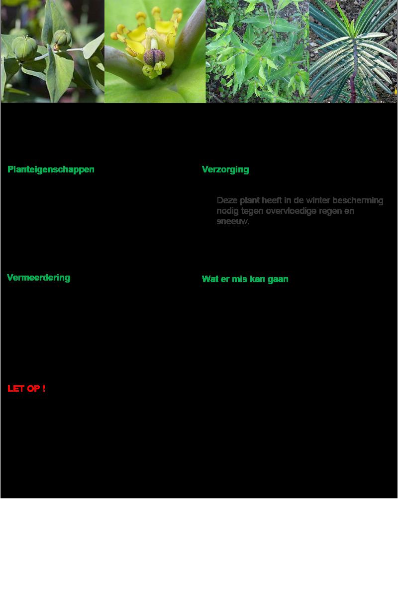 Kruisbladige wolfsmelk.rev.LL.2016.vs1a