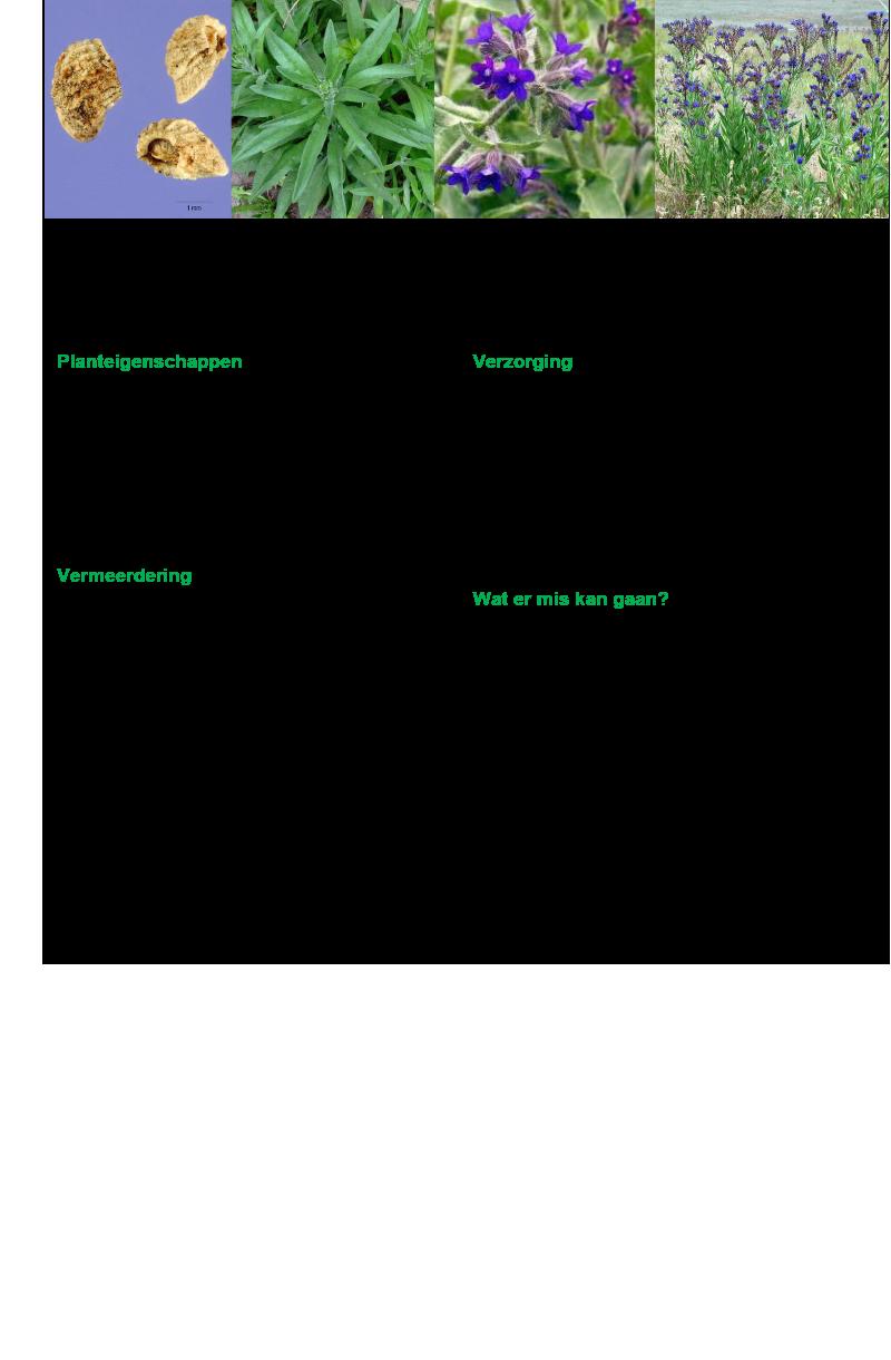 Ossetong tekst.rev.LL.2016.vs1a