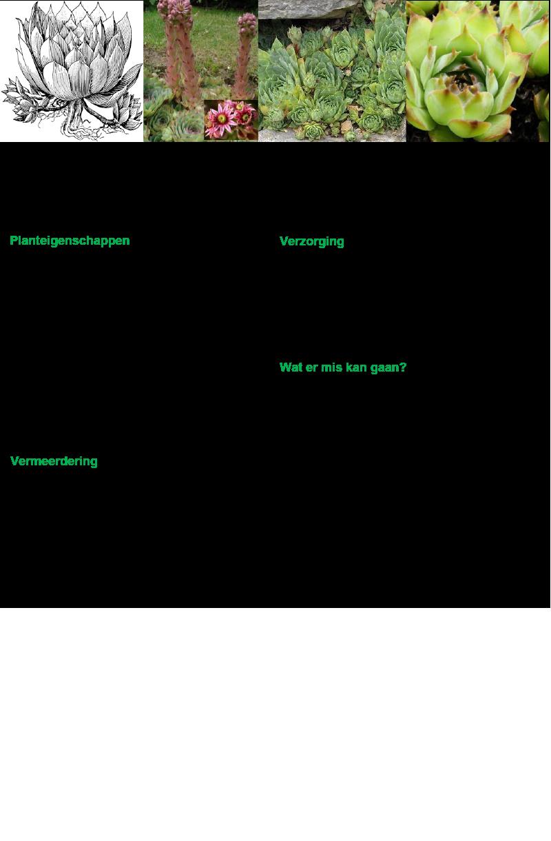 gewone-huislook-rev-ll-2016-vs1a