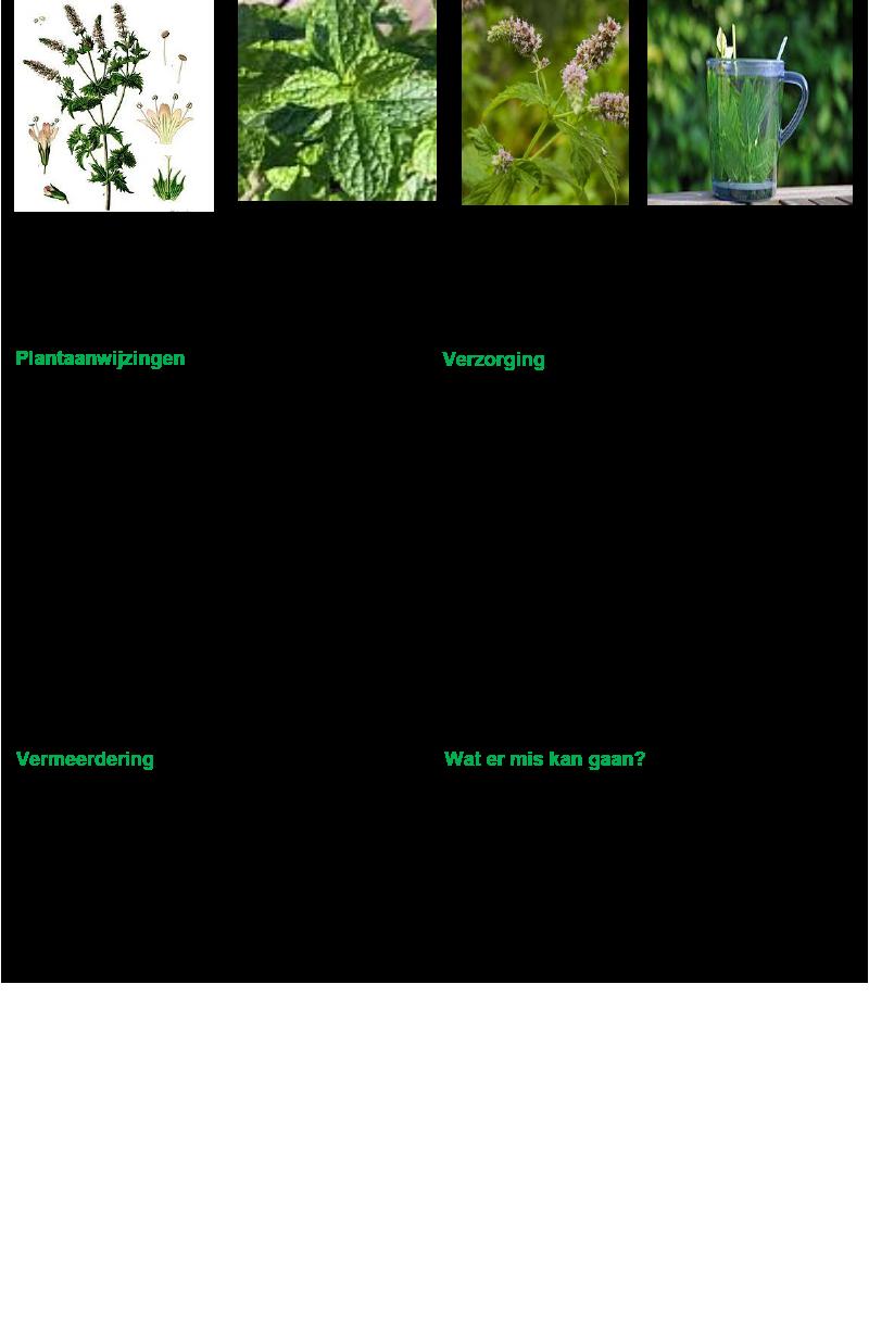 Groene munt.rev.LL.2016.vs1